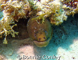Moray Eel at Isla Mujeres.  Taken with a Canon Poweshot S... by Bonnie Conley 